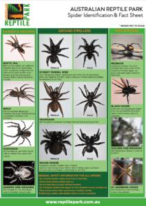spider Identification Chart